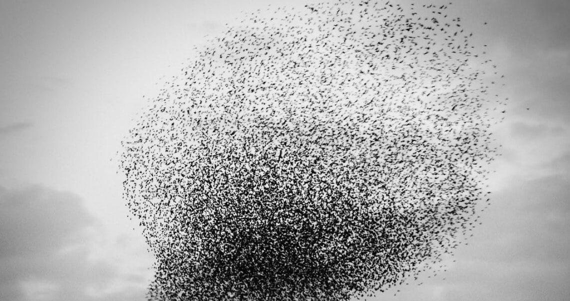 5G powodem masowej śmierci ptaków?