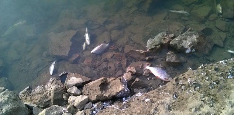 Martwe ryby w Płocku?