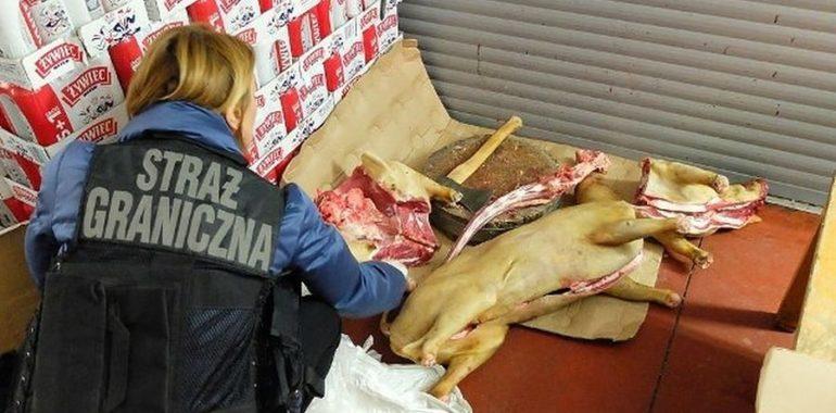 Czy warszawskie bary sprzedają mięso z psów?