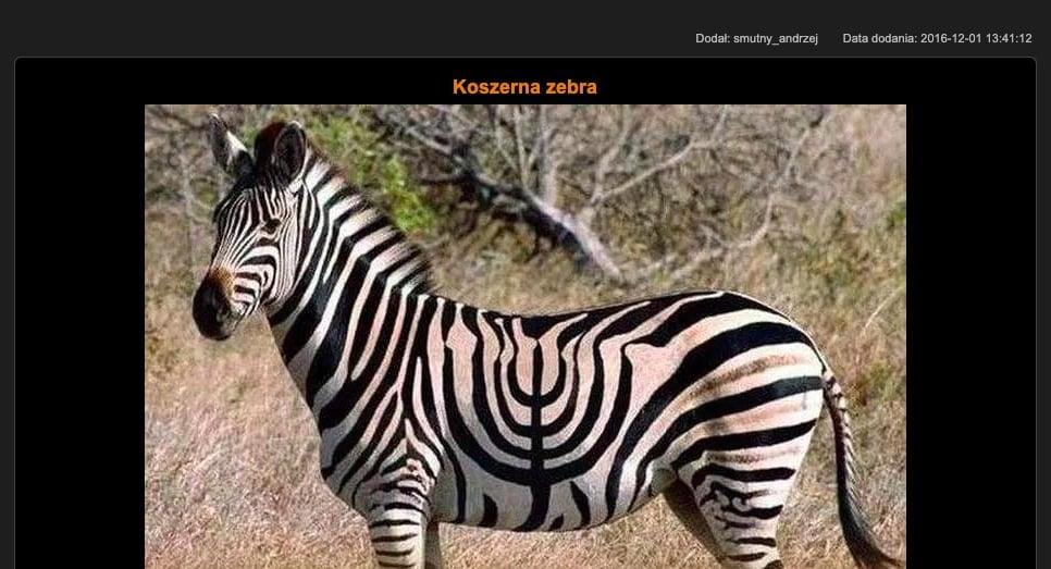 CDA - Koszerna zebra