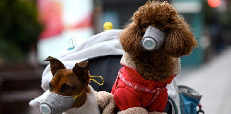 Koronawirus u psa i kota? Czy zwierzęta mogą zarażać?