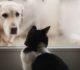 Koronawirus u psa i kota, czy zwierzęta domowe mogą zarażać?