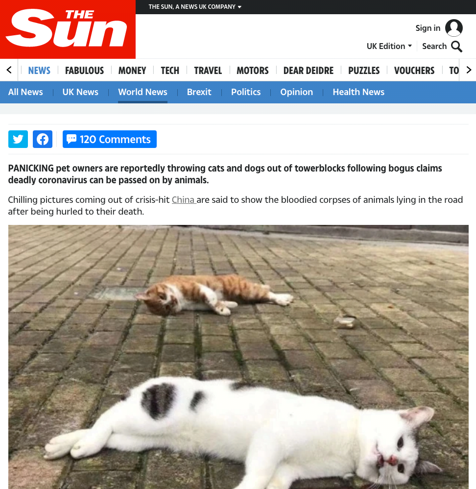 Koronawirus psy i koty - Sun