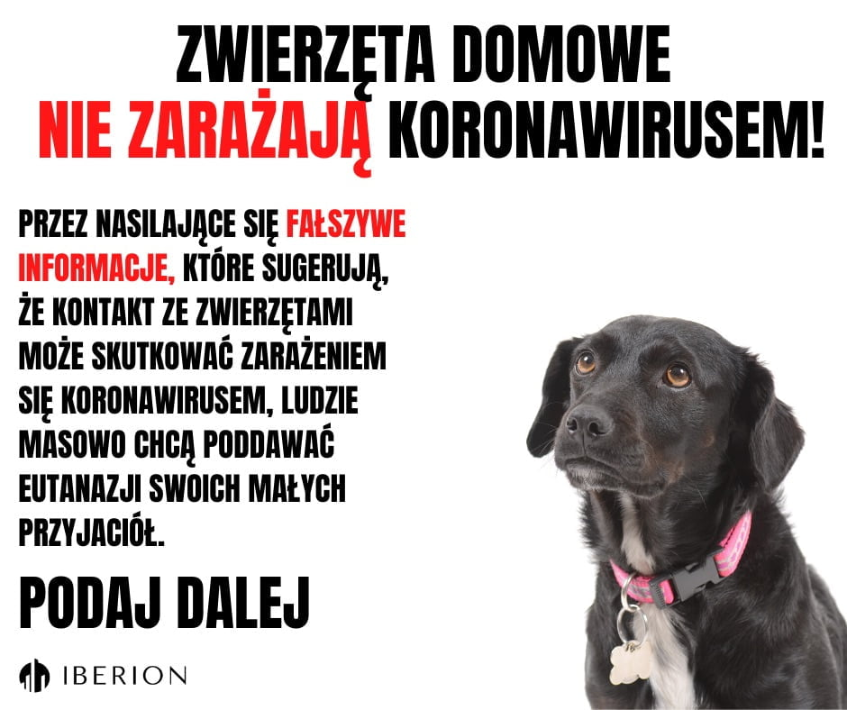 Masowe prośby eutanazję zwierząt domowych
