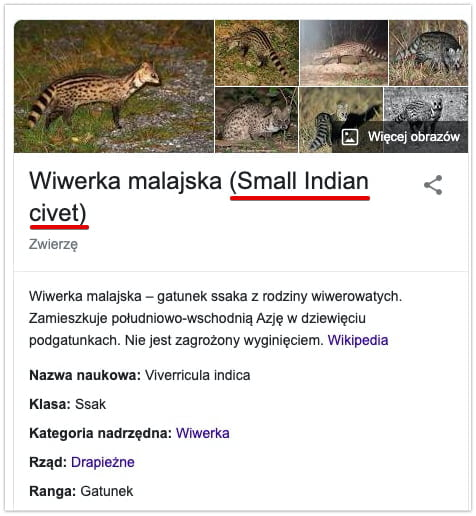 wiwerka malajska - Wikipedia