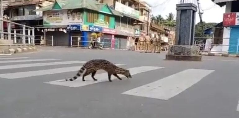 Nie, w Indiach nie pojawił się gatunek uznany za wymarły