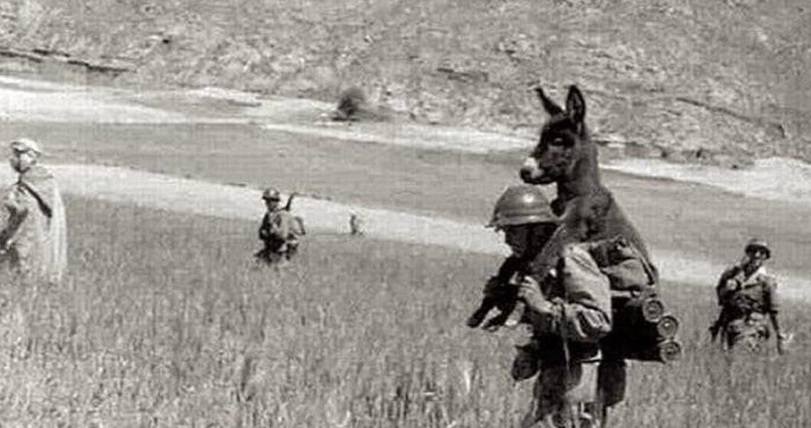 Tak, ten żołnierz niesie osła, ale nie przez pole minowe