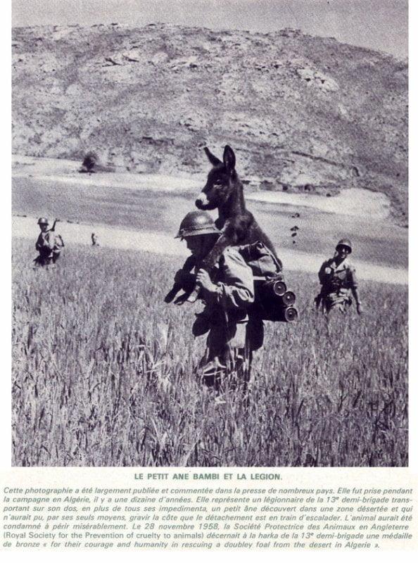 żołnierz niosący osła