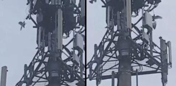 Ptaki atakujące wieżę 5G to fake news