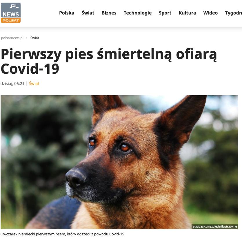 pierwszy pies koronawirusa