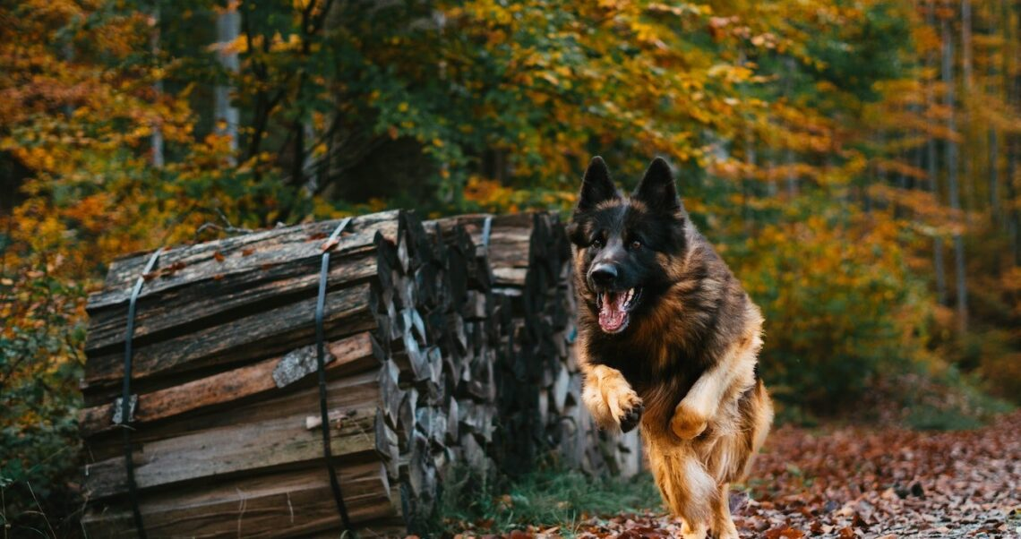 Pierwszy pies zmarł z powodu koronawirusa? Brak dowodów
