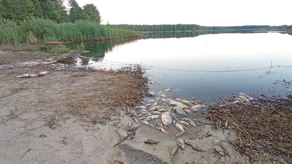 ryby śnięte czajka