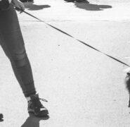 Nie, rząd nie wprowadza zakazu puszczania psów bez smyczy