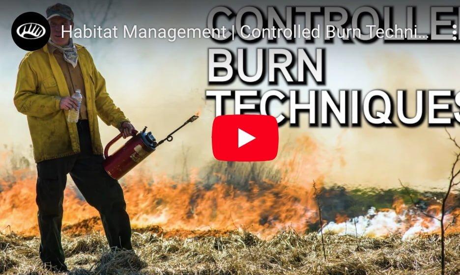 Wypalanie kontrolowane /