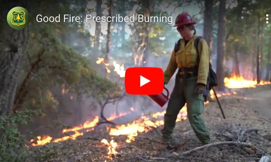 Good Fire: Prescribed Burning